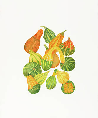 Gourds Paintings