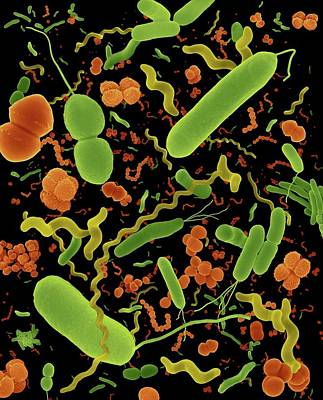 Designs Similar to Common Types Of Bacteria