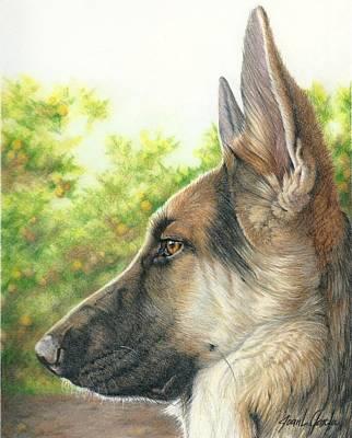 Herding Dog Drawings