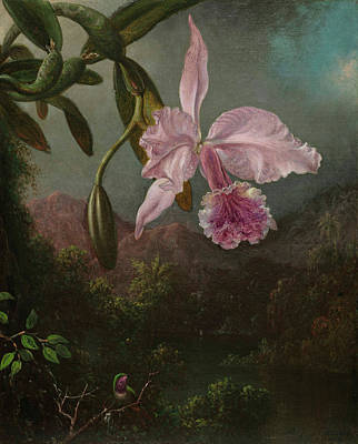 Designs Similar to Orchid Blossoms, 1873