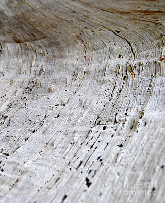Designs Similar to Tree Rings