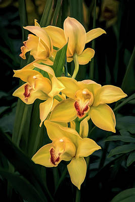 Designs Similar to Bright Yellow Orchids