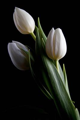 Designs Similar to Tulips Iv by Tom Mc Nemar
