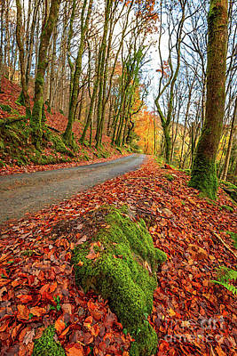 Designs Similar to Country Path Autumn