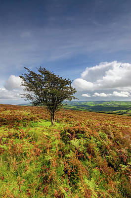North Devon Art