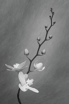 Designs Similar to White Orchid Buds