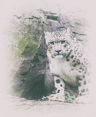 Designs Similar to Snow Leopard by Martin Newman