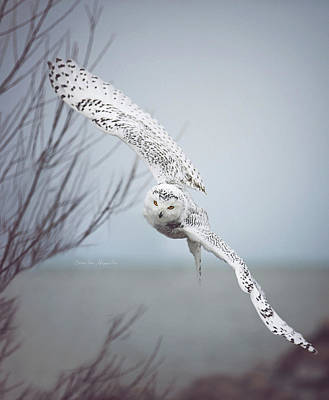 Designs Similar to Snowy Owl In Flight Signed