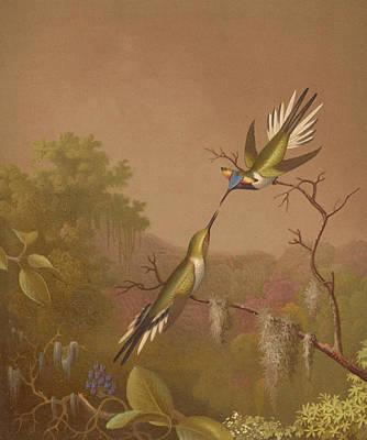 Designs Similar to Brazilian Hummingbirds II