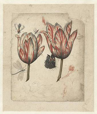 Designs Similar to Tulips by Celestial Images
