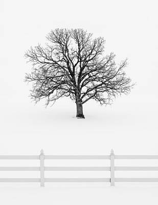Trees Without Leaves Art