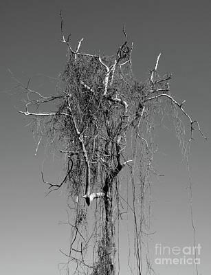 Designs Similar to Mistic Tree by Thomas Maes
