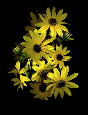 Black Eyed Susans Art Prints