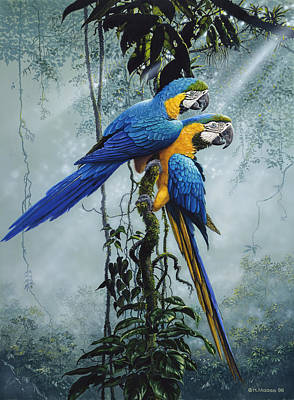 Macaws Paintings