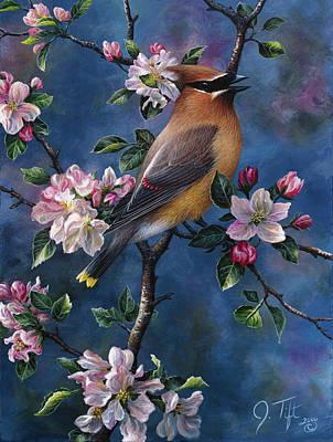 Cedar Waxing Art Prints