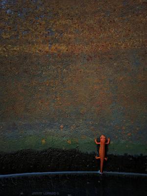 Newts Wall Art