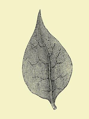Designs Similar to Floating Leaf 3