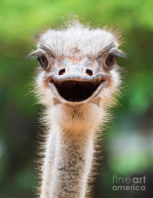 Ostrich Photographs