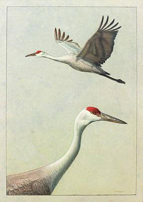 Sandhill Cranes Art Prints