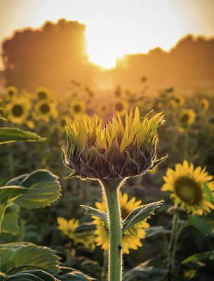 Photograph - Summer Blossom by Heath Cajandig