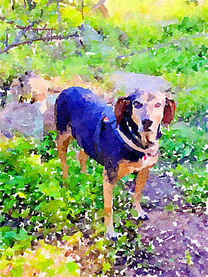 Photograph - Cinnamon the Coonhound by Elizabeth Rose