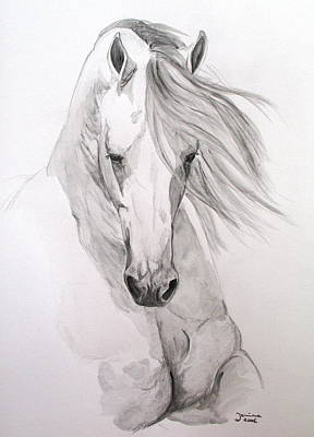 Arabian Horse Art Prints