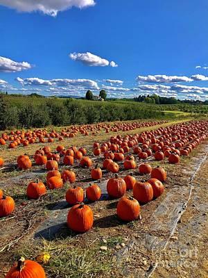 Photograph - Pumpkin Patch by Cornelia DeDona
