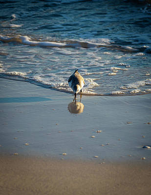 Photograph - Sandpiper by Donald Rogers