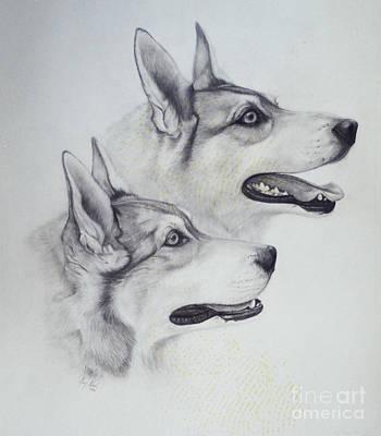 Akc Drawings