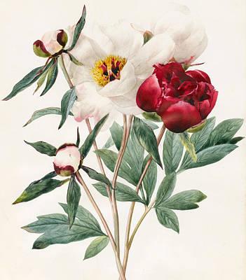Floral Watercolor Drawings