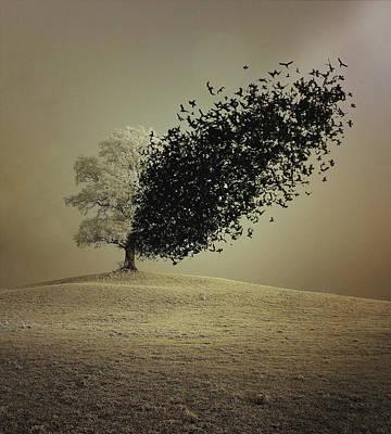 Metamorphosis Photographs