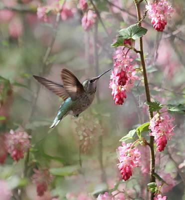 Annas Hummingbird Art