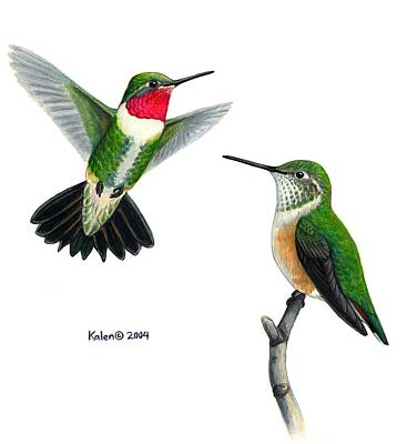 Designs Similar to Broad-tailed Hummingbird Pair