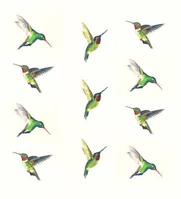Costas Hummingbird Paintings