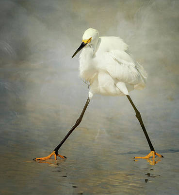 Egrets Photographs