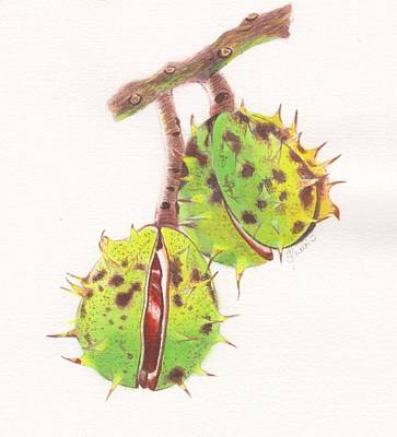 Painting - Horse Chestnuts by Swati Singh