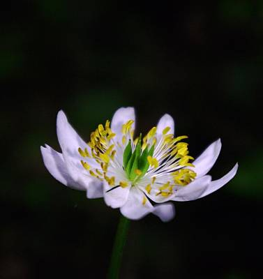 Flower Pint Photographs
