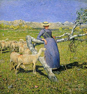 Alpine Meadow Paintings