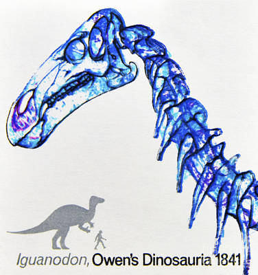 Iguanadon Photographs