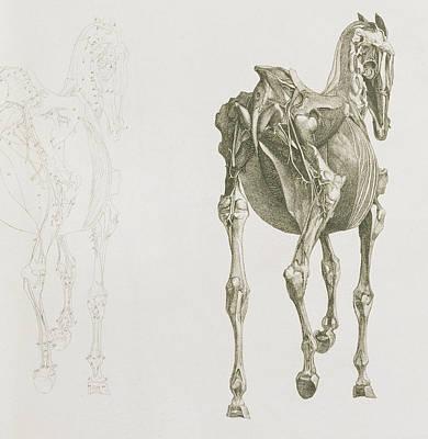 Stubbs Drawings Prints