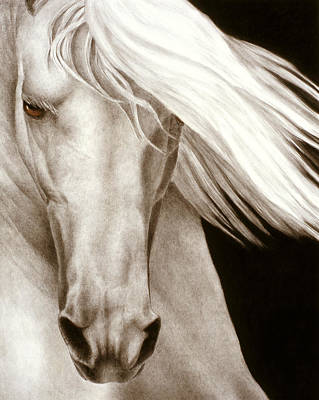 White Horse Watercolor Paintings