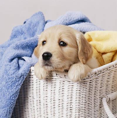 Designs Similar to Golden Retriever Puppy