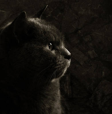Chartreux Posters
