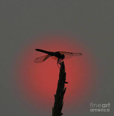 Gary Wing: Bugs Art