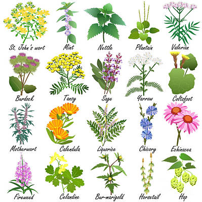 Herbal Art Prints