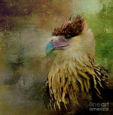 Designs Similar to Portrait Of A Young Caracara