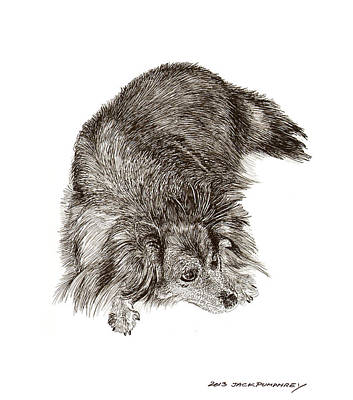 Sheltie Puppy Drawings