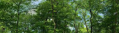 Designs Similar to Forest Canopy by Steve Gadomski