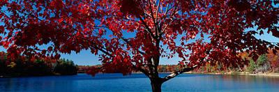 Walden Pond Photographs Prints