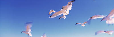 Designs Similar to Seagulls Flying Along Route A1a
